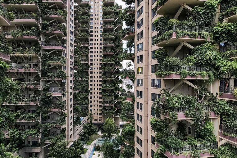 Bem-vindo à selva: plantas invadem blocos de apartamentos chineses.