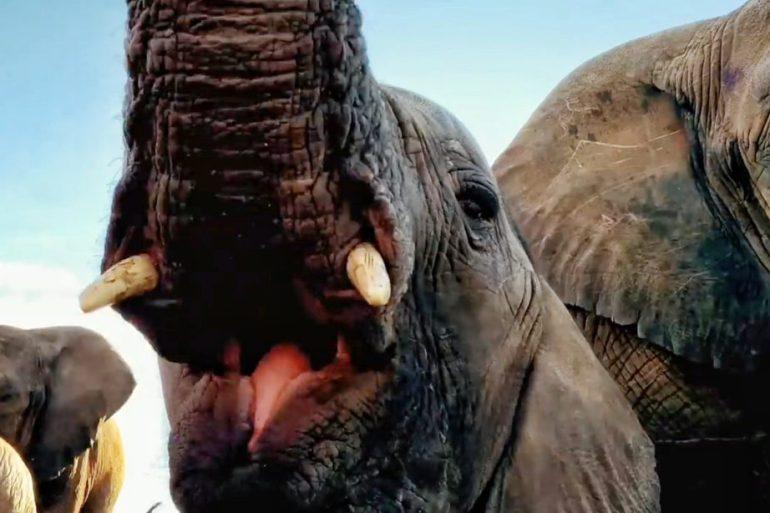 """Elefantes salvajes. Escena sacada del video de Apple: """"Un respeto a la naturaleza""""."""