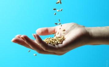 semillas con polifenoles