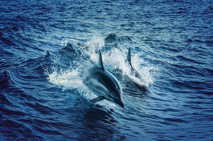 Estudio Delphin
