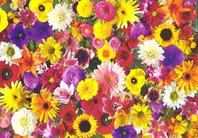 floresweb.jpg