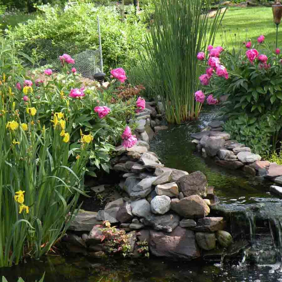 Backyard Pond in Lancaster, PA Eshelman Mill Gardens and Landscapes