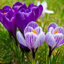 3 Must-Do Tasks to Get Your Garden Ready for Spring