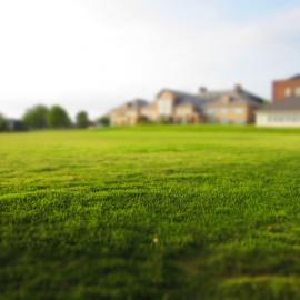 How to Grow Grass That's Green and Thick