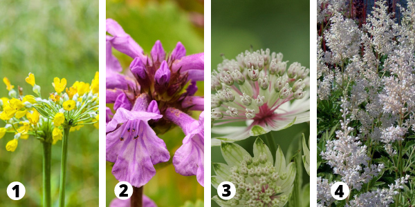 Perennial Flower Combination for Moist Soil and Shade