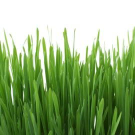 Should I Use Grass Clippings as Mulch?
