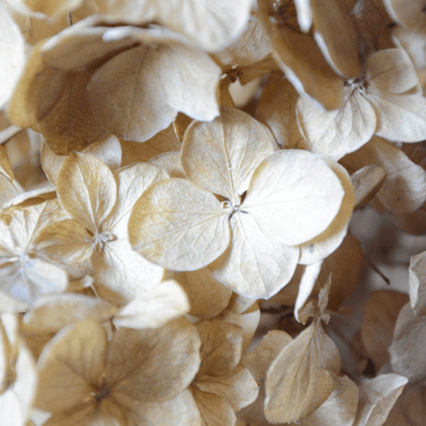 Fall Chores Dried Flowers