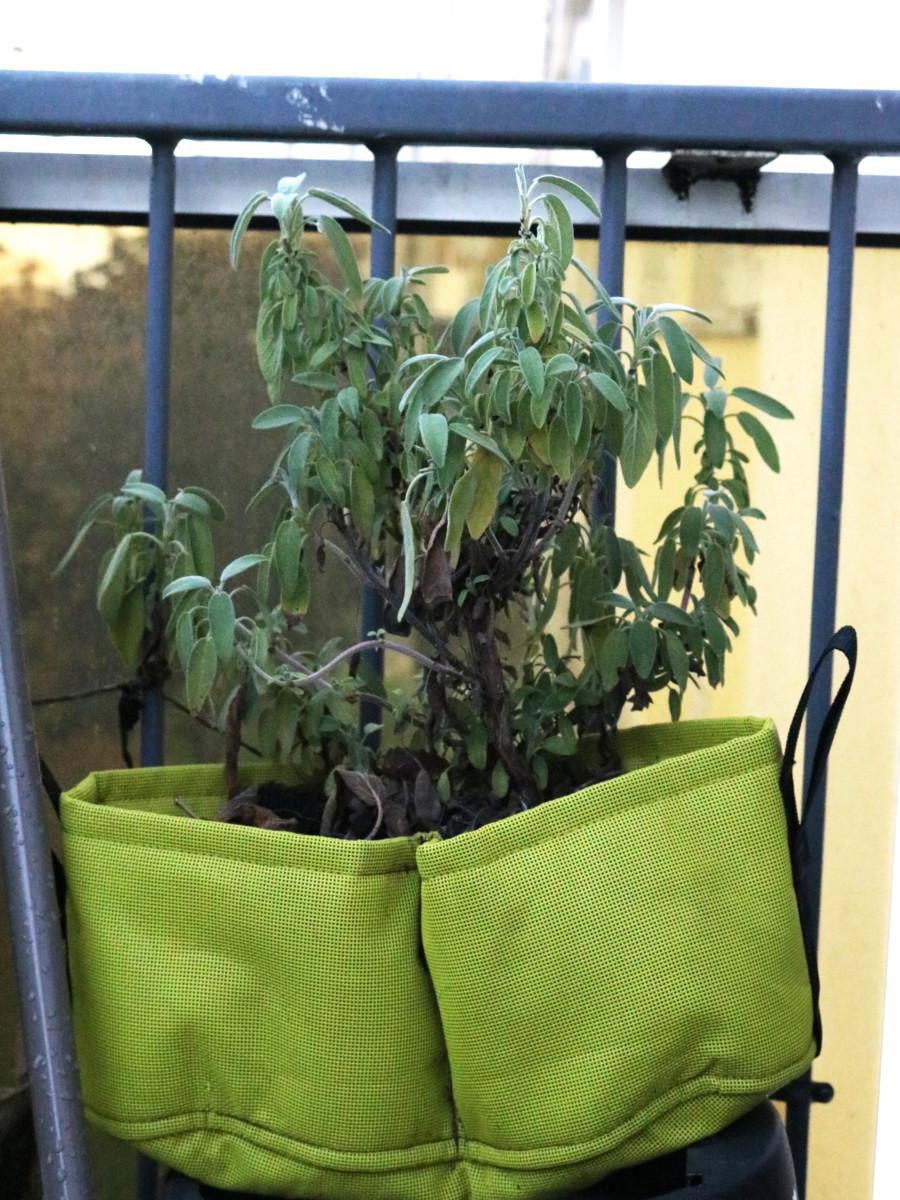 choisir le bon pot : pot en géotextile Bacsac, couleur vert clair pour rempoter de la sauge sur un balcon en automne. Mettre des billes d'argile au fond du pot avant de mettre du terreau et arroser régulièrement. La sauge résiste au froid. | Échoppe Végétale #jardinagefacile #balcon #potagerurbain