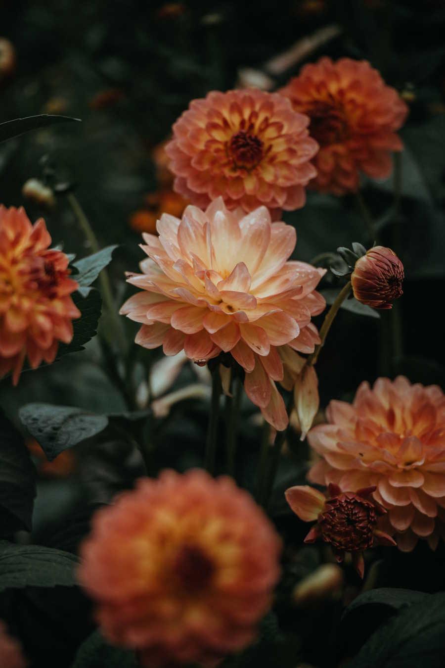 L'échoppe Végétale - Inspirations pour un automne pas monotone | fleurs de dahlias orange pour réaliser un bouquet d'automne comme chez le fleuriste