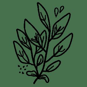 Graines de plantes aromatiques et médicinales. Ces plantes comestibles sont faciles à cultiver dans un pot, une jardinière ou sur un balcon, même en intérieur. Ces graines d'aromatiques et de plantes médicinales sont bios et reproductibles. #jardinage #aromatique #basilic menthe #persil #balcon