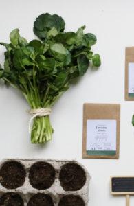 sachet kraft de graines de cresson alénois bios à cultiver au balcon potager ou en graines germées
