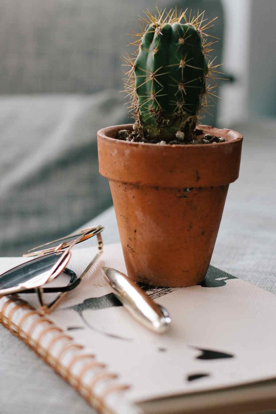 conseil pour choisir la bonne taille de pot en terre pour jardiner sur un balcon, pot de fleurs