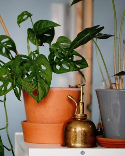 brumisateur en laiton style vintage pour humidifier les plantes vertes