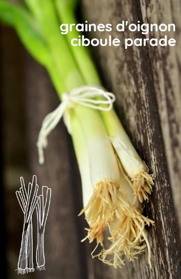 box jardinage bio été : sachet de graines bio et reproducible d'oignon ciboule