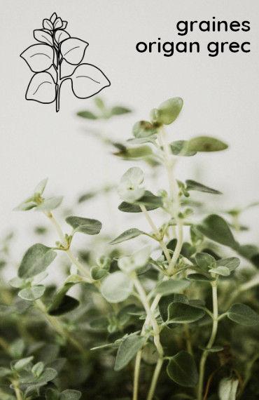 box jardinage bio été : sachet de graines bio et reproducible d'origan grec