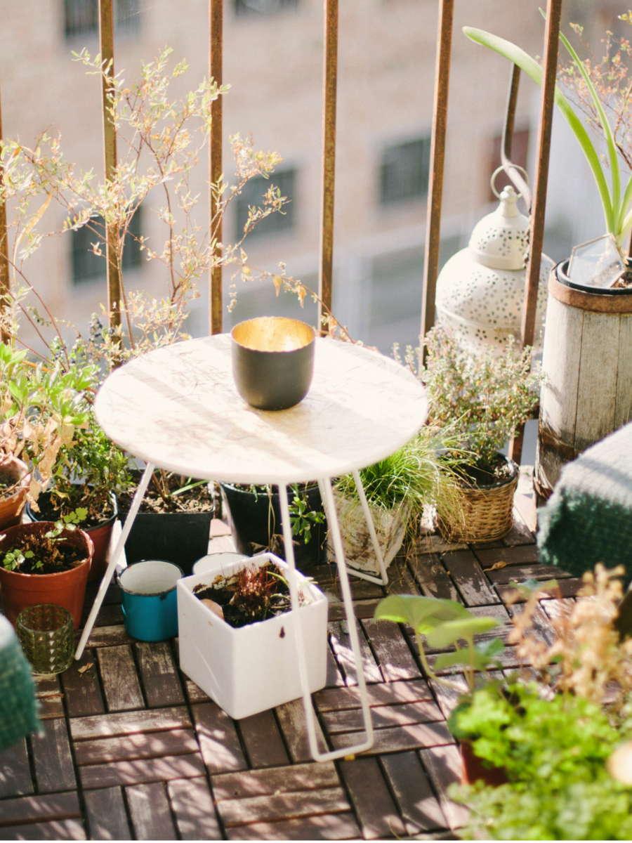cultures de mars au potager sur balcon. Conseils facile pour jardin en ville. L'échoppe Végétale