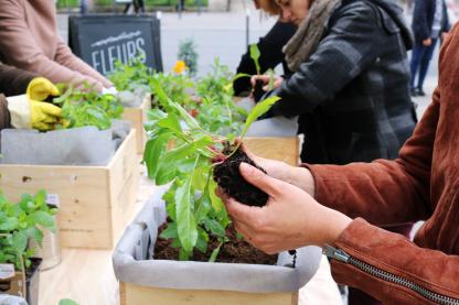 atelier jardinage en ville et en entreprise, potager sur balcon - Échoppe Végétale