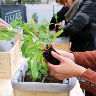 atelier jardinage en ville et en entreprise, potager sur balcon – Échoppe Végétale