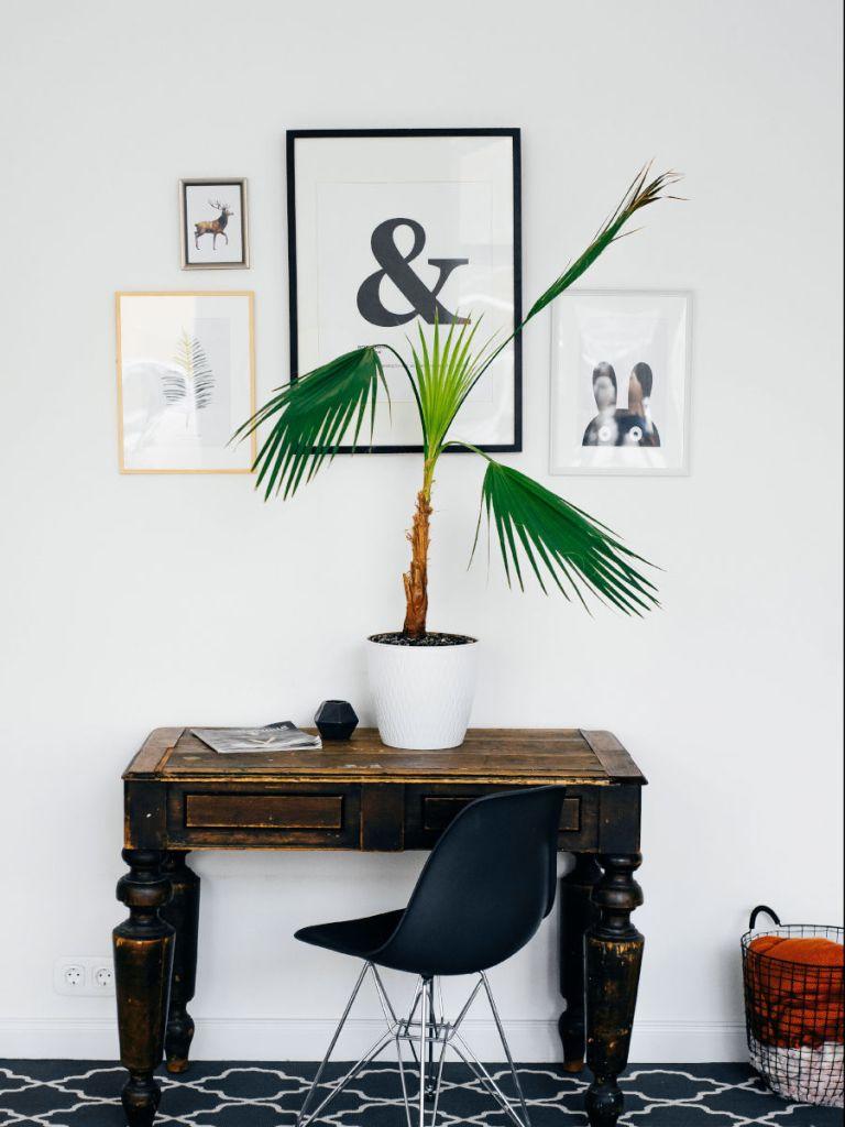 décorer son appartement avec des plantes d'intérieur en mode lagom