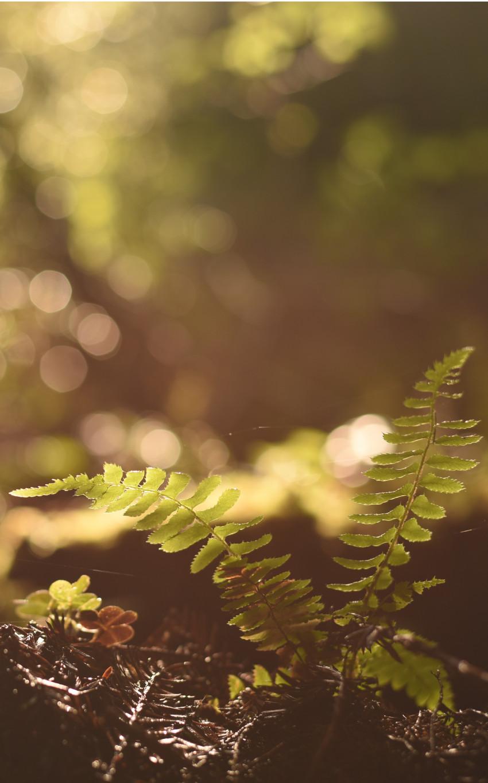 fougères qui poussent à l'ombre avec une faible source de lumière