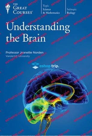 TTC Video Understanding the Brain