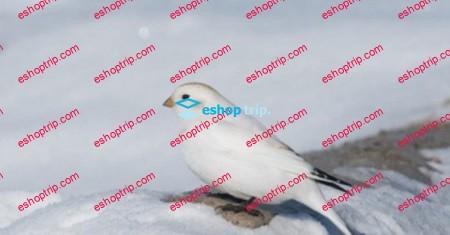 Bird Watching in Alaska