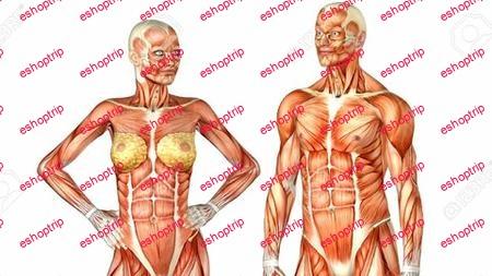 Human Skeletal System Part 1 The Upper Limb