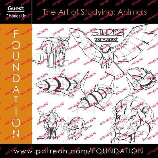 Foundation Patreon The Art of Studying Animals by Charles Lin