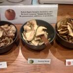 Dried Honey Crisp Apples