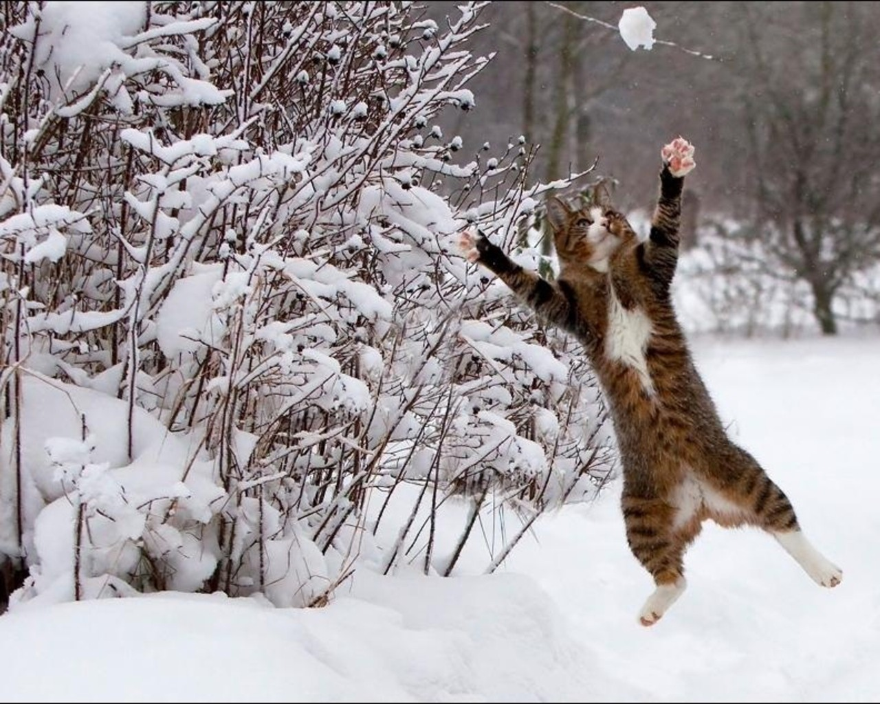 Image result for animals on snow