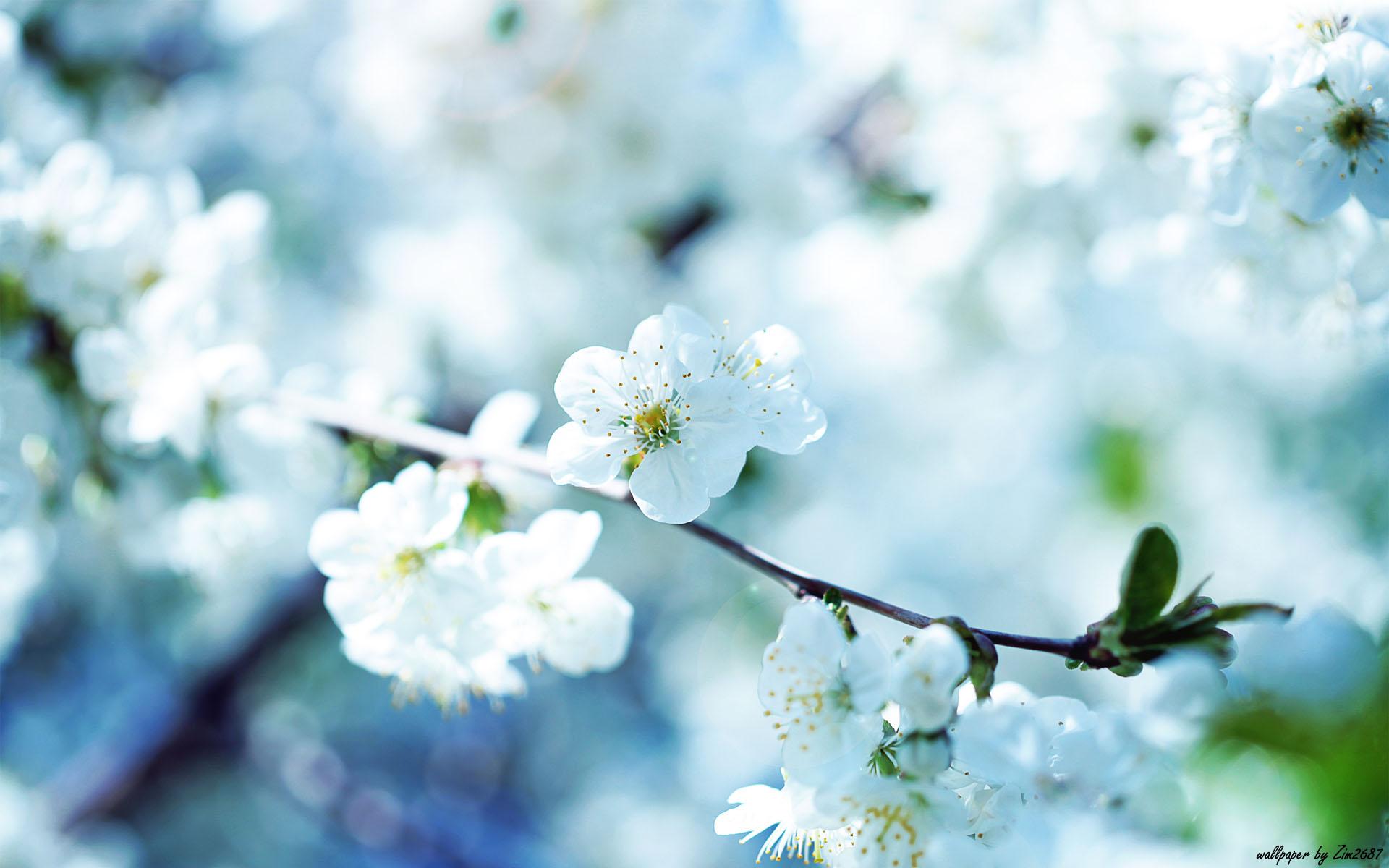 Beautiful Flower S Wallpaper 1920x1200 22545