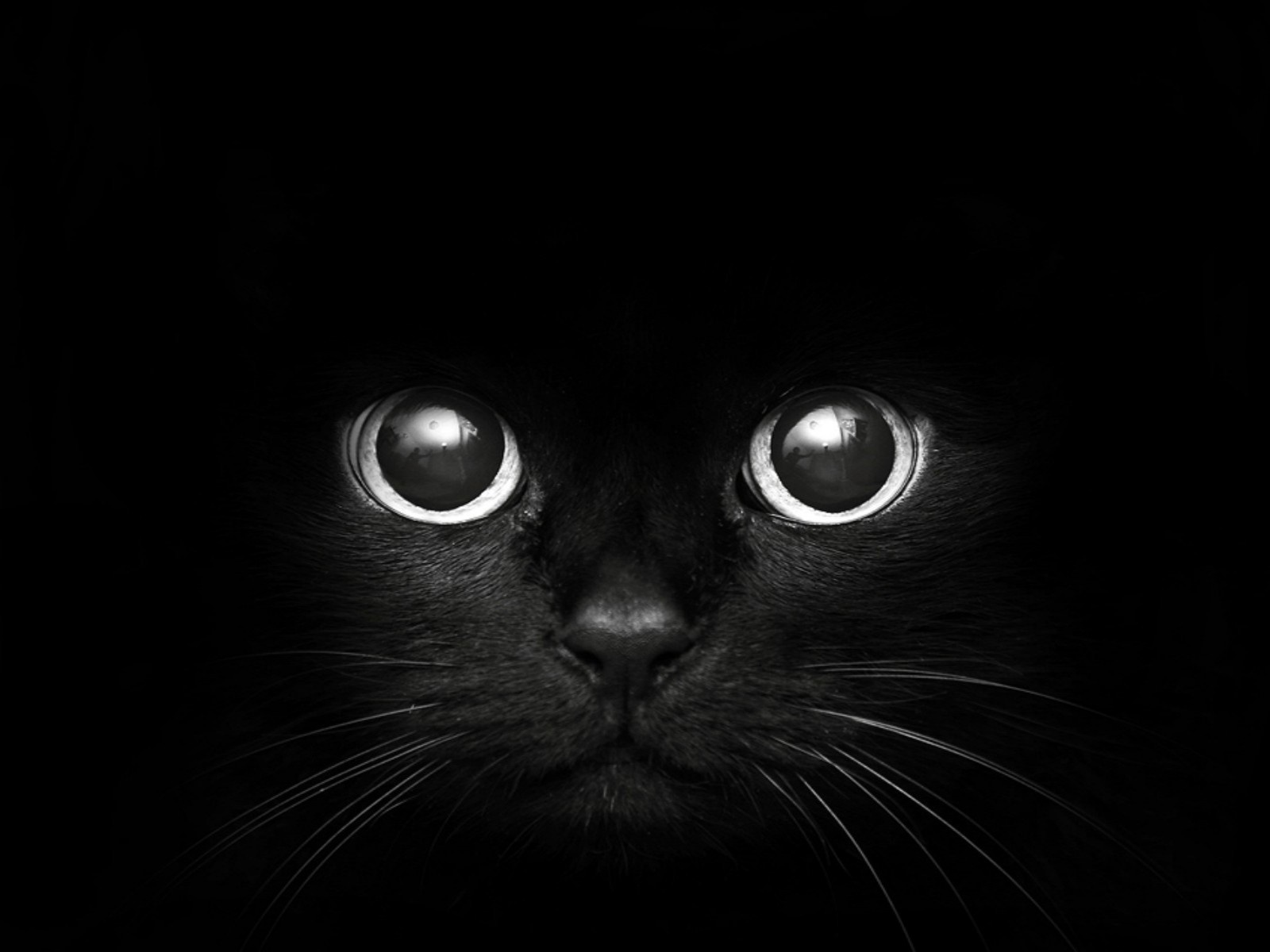 black cat wallpaper | 1600x1200 | #74496