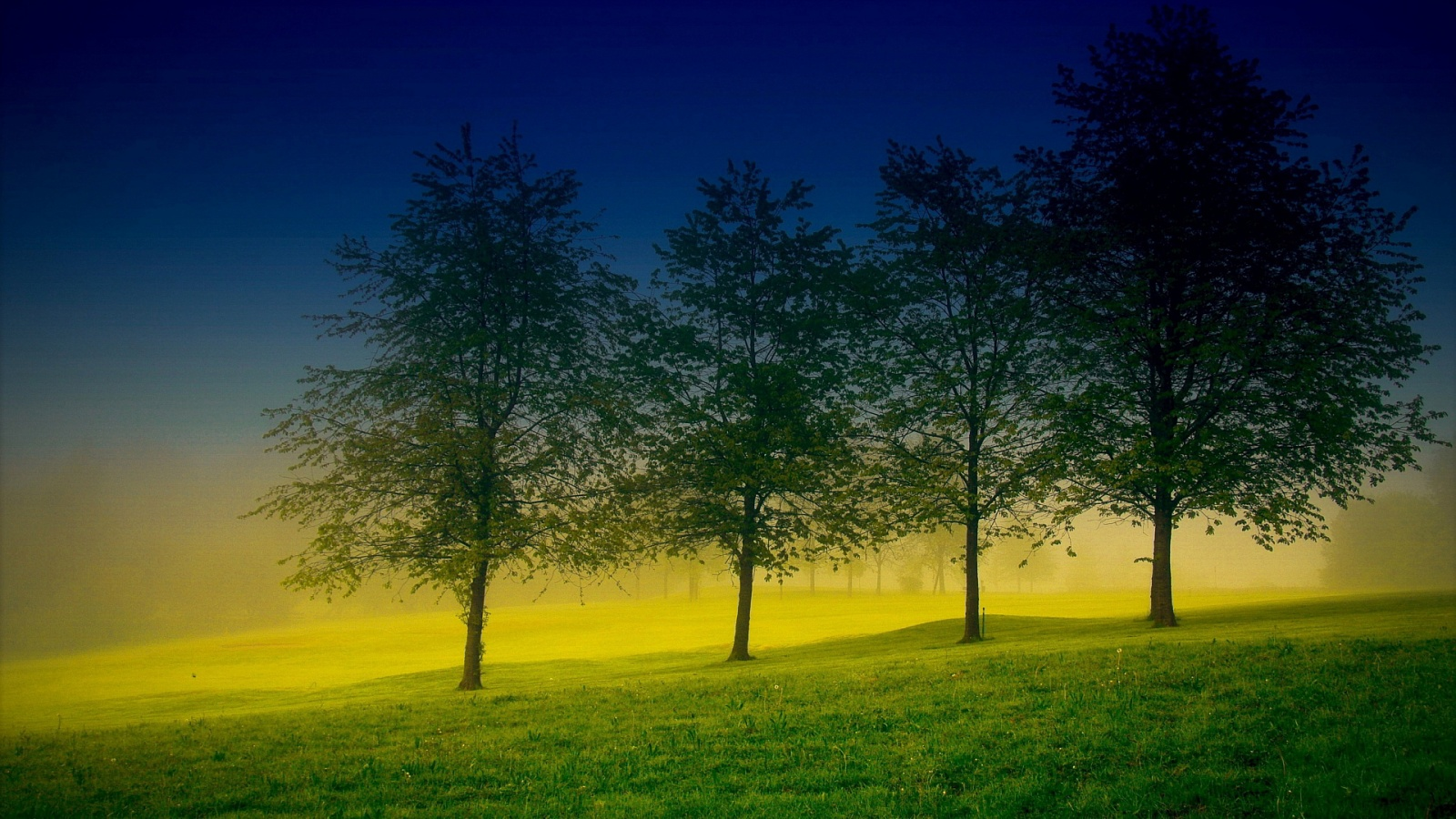 Four Trees Wallpaper