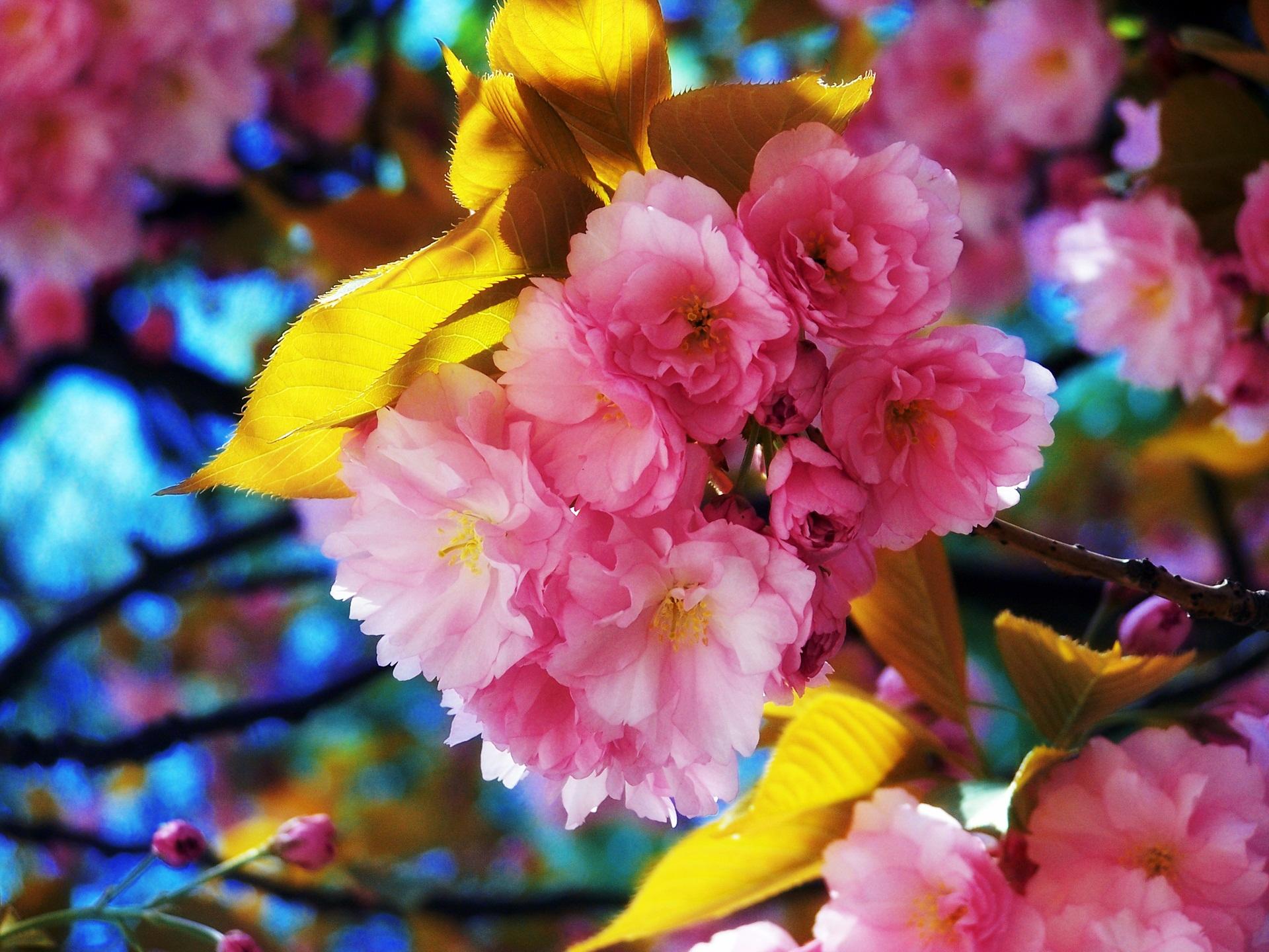 Pretty Flowers Hd Wallpaper 1920x1440 23438