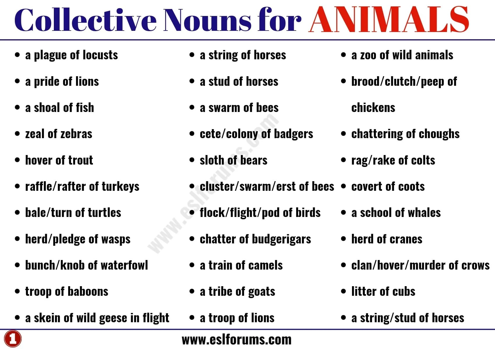 Useful Collective Nouns For Animals In English