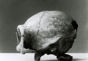 Fotografía de la época del cráneo del chimpancé tiroteado en Camerún