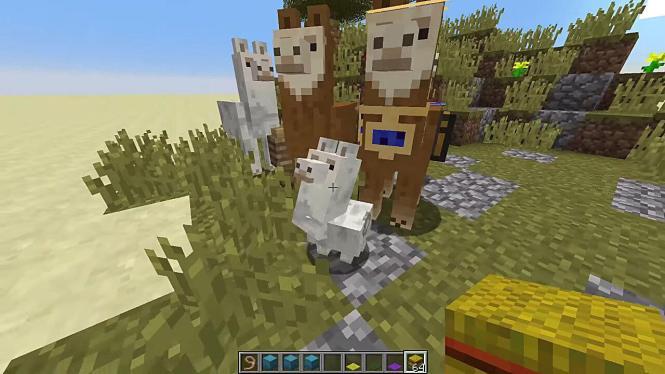 Breed Llamas in Minecraft