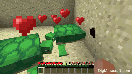 Breed Turtles in Minecraft