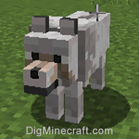 Tame a Wolf in Minecraft