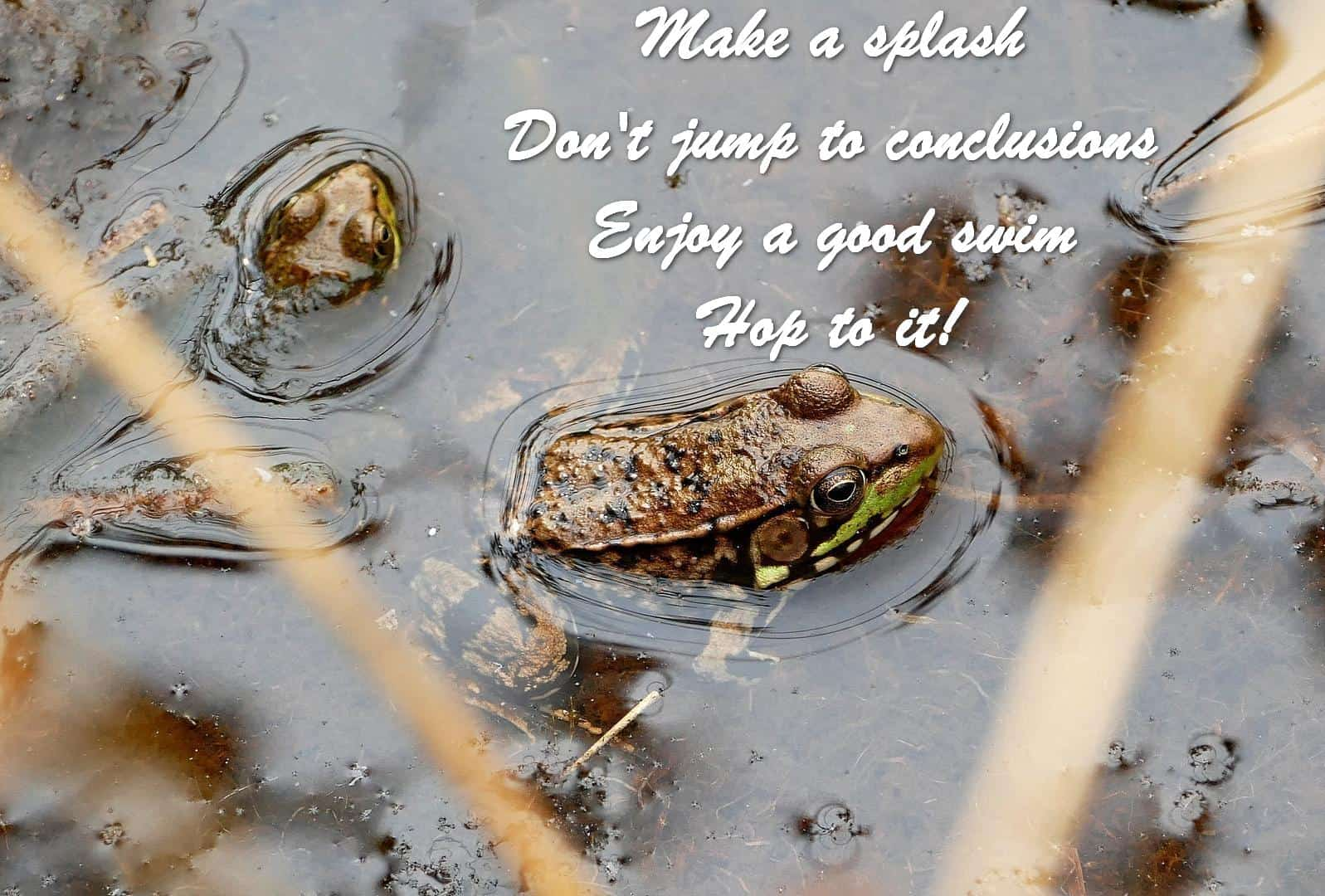Make a splash Don't jump to conclusions Enjoy a good swim Hop to it!