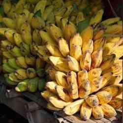 A Bunch of delicious bananas