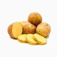 patata-agria-ecologica