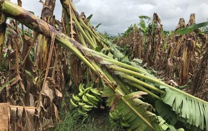 Superan los $47.5 millones las pérdidas agrícolas
