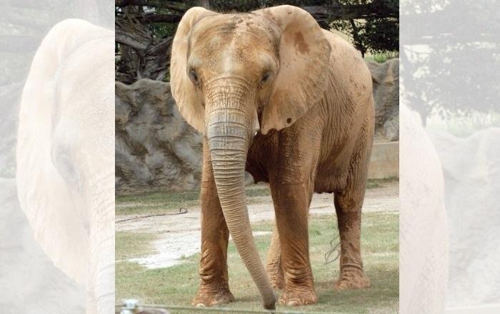 FEMA asigna $6.2 millones al zoológico de Mayagüez