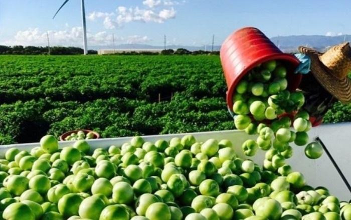 Agricultura Federal anuncia que continuará servicios por internet y teléfono