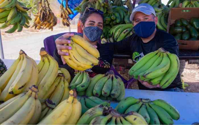 Agricultor se reinventa en medio de la pandemia