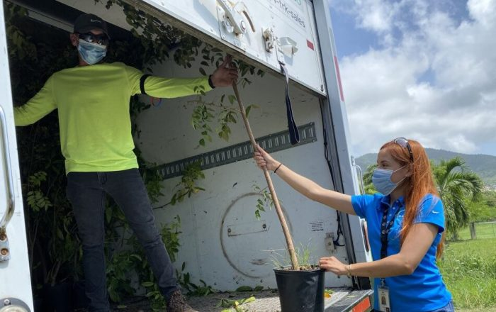 Donan 456 árboles a reserva natural en Maunabo
