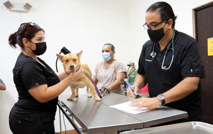 Decenas de mascotas reciben la vacuna contra la rabia