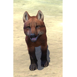 Red Pit Wolf Pup