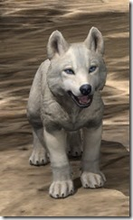 White River Ice Wolf Pup Front